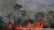 Brasilien Waldbrände im Amazonas