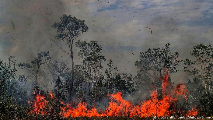 A fire burning a Brazilian forest