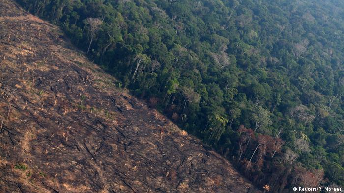 Deforestación en la Amazonía brasileña saltó un 222 % en agosto ...