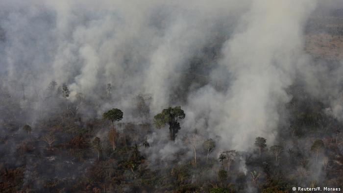 Fogo devasta floresta na região de Porto Velho