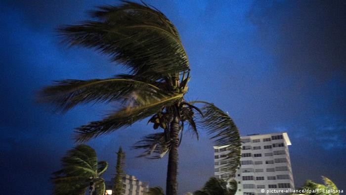 Сильный ветер и пальма на острове Большой Багама