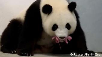 Мама-панда Менг Менг