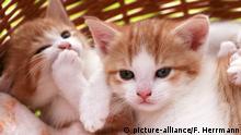 Symbolbild Hauskatz - Katzenjunge