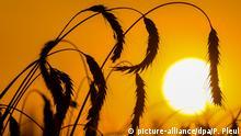 Sommerhitze - Sonnenuntergang in Brandenburg