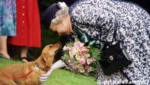 ***BG Politiker und Hunde***Archivbild*** ARCHIV - ILLUSTRATION - Die britische Königin Elizabeth II. streichelt am 20.05.1998 einen ihrer Corgi-Hunde. Foto: EPA (zu dpa Themenpaket Elizabeth II. wird 90 vom 13.04.2016) +++(c) dpa - Bildfunk+++ |