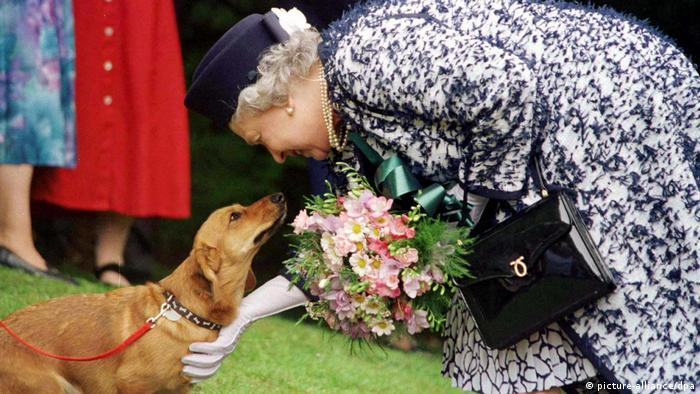 Queen Elizabeth II stooping to greet dog (picture-alliance/dpa)
