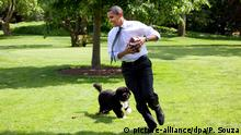 ***BG Politiker und Hunde***Archivbild*** United States President Barack Obama with family dog, Bo, playing football on the South Lawn of the White House during a brief break from meeting, Tuesday, May 12, 2009. Foto: Pete Souza - White House ¿ +++(c) dpa - Report+++ | Verwendung weltweit