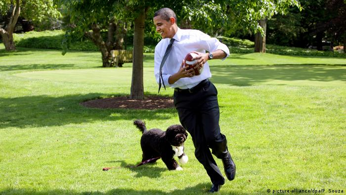 President Barack Obama with family dog, Bo, playing football on the South Lawn of the White House during a brief break from meeting