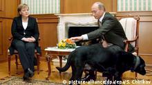 Russland | Merkel bei Putin in Sotschi