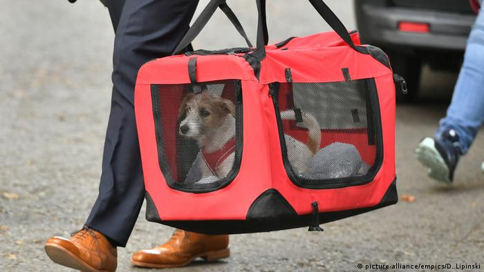 Boris Johnson's new dog being carried across the street (picture-alliance/empics/D. Lipinski)