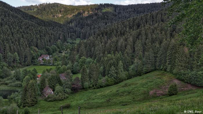 Deutschland | Harz | Harzer Hexen-Stieg (DW/J. Baur)