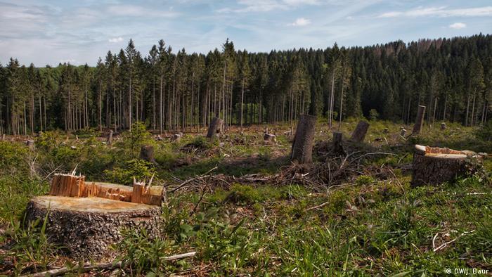 Forest damage in Harz National Park (DW/J. Baur)