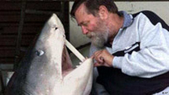 أنصار البيئة يبدأون حملة لحماية اسماك القرش في أوروبا علوم وتكنولوجيا آخر الاكتشافات والدراسات من Dw عربية Dw 08 10 2007
