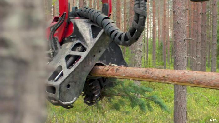 Trees being logged in Finland
