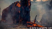 Brände im Amazonas-Gebiet