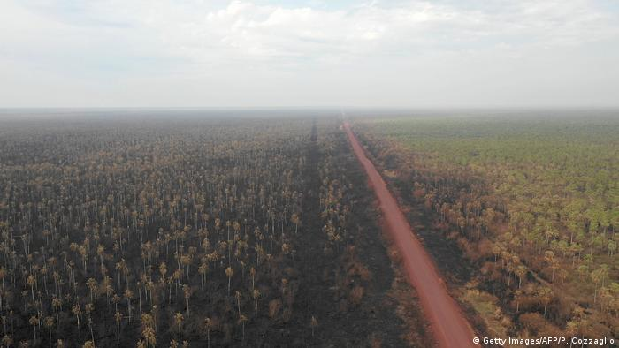 Fire-ravaged trees in the Bolivian Pantanal