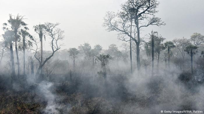 Brände im Amazonas-Gebiet (Getty Images/AFP/A. Raldes)