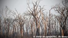 View of burnt areas of the Amazon rainforest, near Abuna, Rondonia state, Brazil, on August 24, 2019. - President Jair Bolsonaro authorized Friday the deployment of Brazil's armed forces to help combat fires raging in the Amazon rainforest, as a growing global outcry over the blazes sparks protests and threatens a huge trade deal. (Photo by CARL DE SOUZA / AFP) / The erroneous mention[s] appearing in the metadata of this photo by CARL DE SOUZA has been modified in AFP systems in the following manner: [Abuna] instead of [Porto Velho]. Please immediately remove the erroneous mention[s] from all your online services and delete it (them) from your servers. If you have been authorized by AFP to distribute it (them) to third parties, please ensure that the same actions are carried out by them. Failure to promptly comply with these instructions will entail liability on your part for any continued or post notification usage. Therefore we thank you very much for all your attention and prompt action. We are sorry for the inconvenience this notification may cause and remain at your disposal for any further information you may require. (Photo credit should read CARL DE SOUZA/AFP/Getty Images)