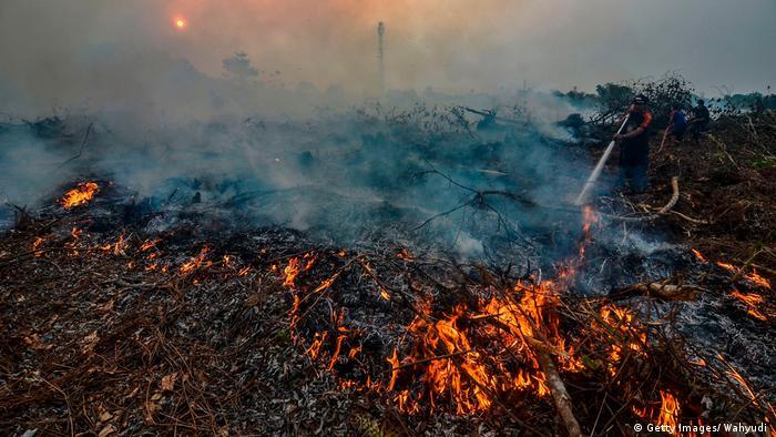 Greenpeace: Pengawasan dan Penegakan Hukum Solusi Kebakaran Hutan ...