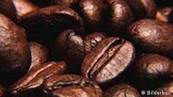 Les grains de café sont passés au peigne fin.