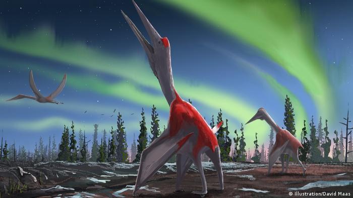 Cryodrakon Boreas - neue entdeckte Dinosaurier Art in Alberta, Kanada