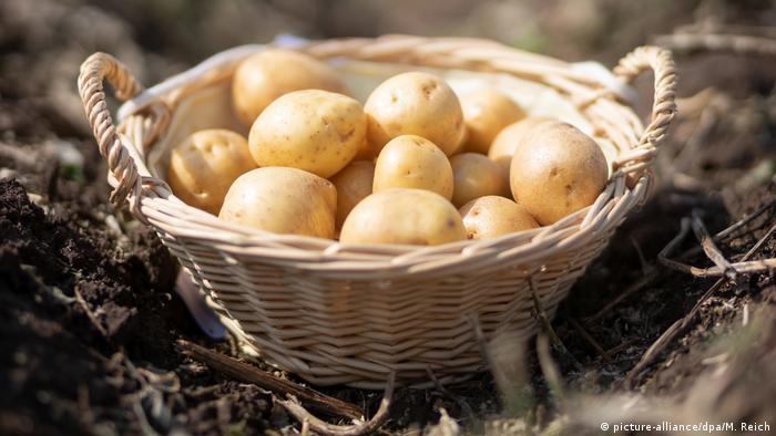 BdT - Kartoffelernte in Thüringen