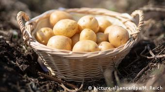 Πατάτες από τη Θουριγγία