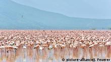 Symbolbild: Flamingos