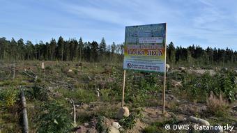 Вырубка леса для порта в Приморске
