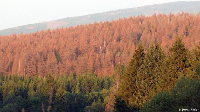 Ein Wald mit toten roten Bäumen