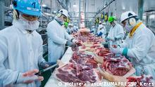 USA Handelsstreit mit China | Schweinefleisch-Verarbeitung in Missouri