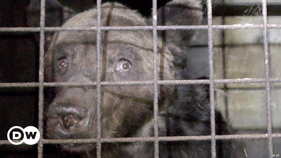 في أمريكا سبع سنوات سجن لمن يعذب الحيوانات منوعات نافذة Dw عربية على حياة المشاهير والأحداث الطريفة Dw 27 11 2019