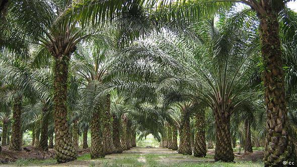 ماليزيا:الحفاظ على زراعة النخيل وحماية الحياة البرية