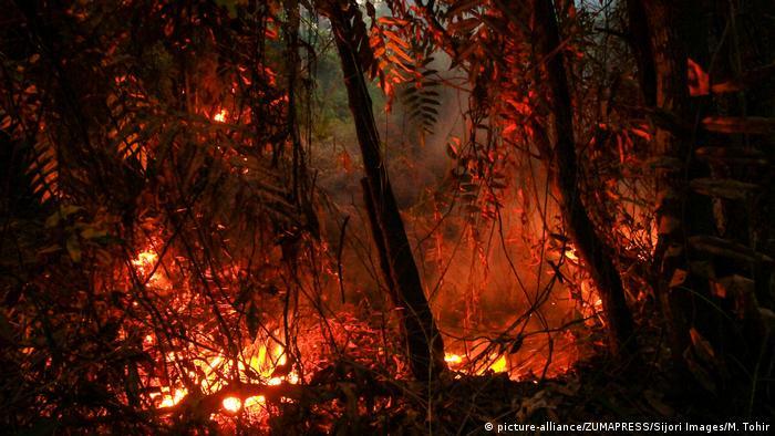 Flächenbrand in Indonesien mit starker Rauchentwicklung