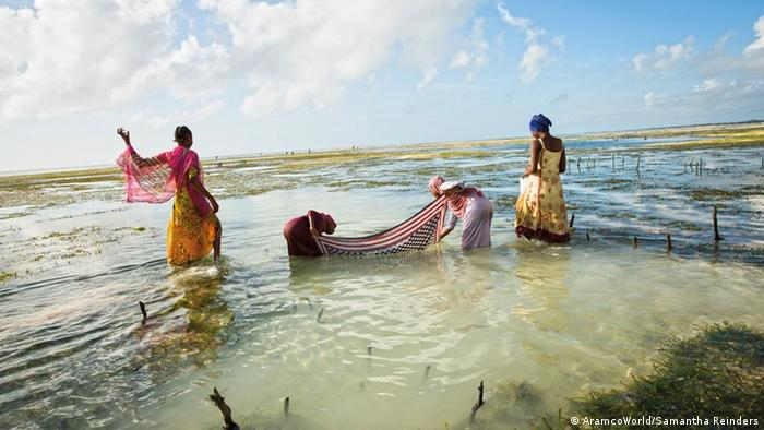Women using kangas to catch fish in shallow water (AramcoWorld/Samantha Reinders)