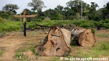 Brazil, Para, Trairao, illegally lumbered trees of Amazon rainforest PUBLICATIONxINxGERxSUIxAUTxHUNxONLY FLKF00704