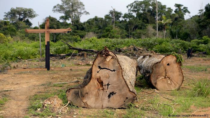 Trocos de árvore em desmatamento ilegal na Amazônia