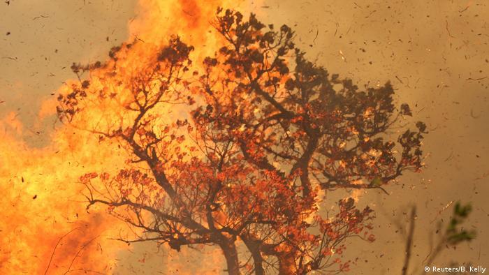 هذا العام، اشتعلت حرائق الغابات وتفاقمت على الأرجح بسبب تغير المناخ، بشكل سيء للغاية: في روسيا والولايات المتحدة وأستراليا.. ومع ذلك، فإن حرائق غابات الأمازون المطيرة ترجع جزئياً على الأقل إلى سبب آخر: الرئيس المنتمي لليمين المتطرف في البرازيل جايير بولسونارو الذي طالما شجع المزارعين على قطع الأشجار وبناء مراع جديدة. وتسببت الحرائق في آثار بيئية كارثية.
