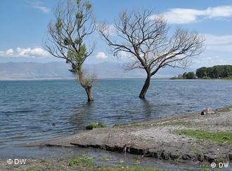 Im Hochwasser stehende Bäume im Südkaukasus (Foto: DW)