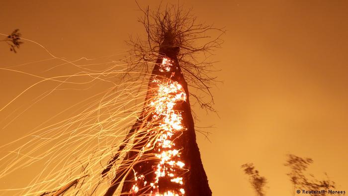 Tronco de árvore em brasa durante queimadas na Amazônia em setembro de 2019.
