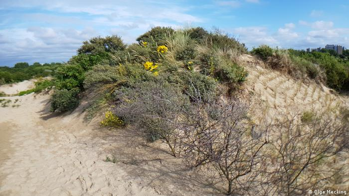 Sand dunes and shrubs