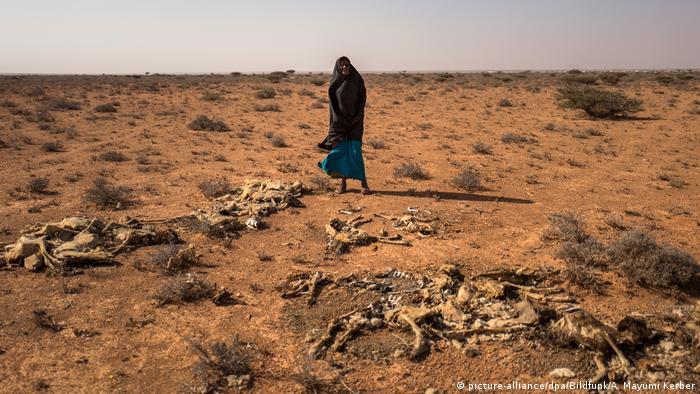 Женщина и скелеты коз на северо-востоке Сомали
