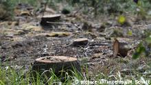 Wiederbewaldung von Schadflächen