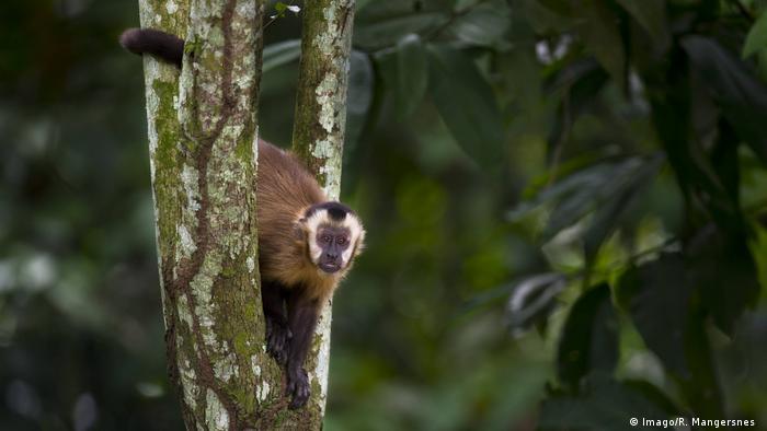 En la mayoría de los países de América Latina, las actividades turísticas en parques naturales y áreas naturales protegidas no están permitidas. Por este motivo, el gobierno de Bolivia cerró 22 áreas protegidas, entre ellos el Parque Nacional Madidi. El cese de la actividad permitirá que la fauna y la flora descansen, un bien necesario para los ecosistemas más frecuentados por el turismo.