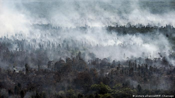 Smoke billows from forest fires on Borneo
