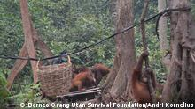 Borneo Orangutan Rehabilitation Center Kalimantan Waldbrände Indonesien