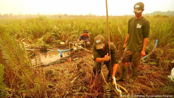Indonesien Orangutans in Kalimantan (BOSF 2109/Mawas Conservation Program)
