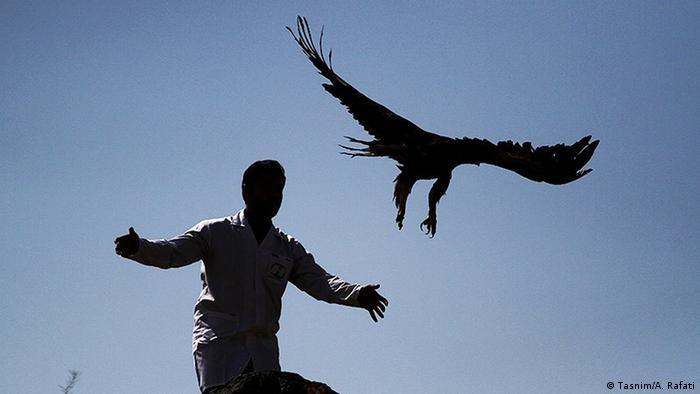 تعداد ۶۰ بهله پرنده شکاری از قبیل عقاب ، دلیجه و تعدادی دیگر از پرندگان بعد از نگهداری و مراقبت توسط سازمان محیط زیست استان همدان در ارتفاعات همدان رها شدند و به آغوش طبیعت بازگشتند.