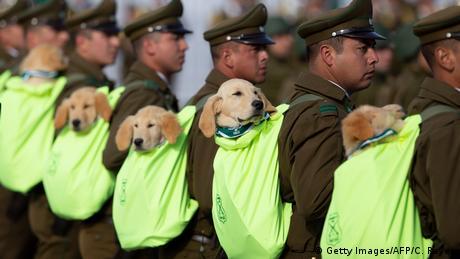 BdTD Chile Militärparade | Polizisten mit Spürhunden (Getty Images/AFP/C. Reyes)