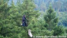 Douglasien Wald Bäume Forst